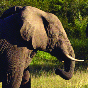 Mozambique_fauna